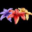 Liliomok színes falmatrica