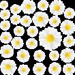 Margaréta virág színes falmatrica csomag