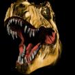 Dinószaurusz fej színes falmatrica