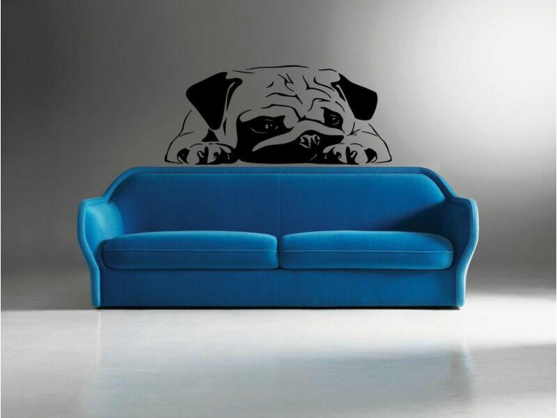 Bulldog falmatrica 03