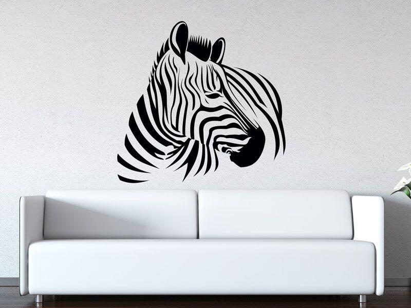 Zebra falmatrica