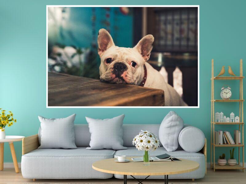 Francia Bulldog - Öntapadós poszter