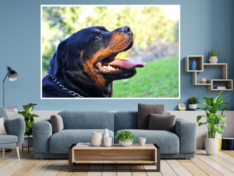 Rottweiler 1 - Öntapadós poszter