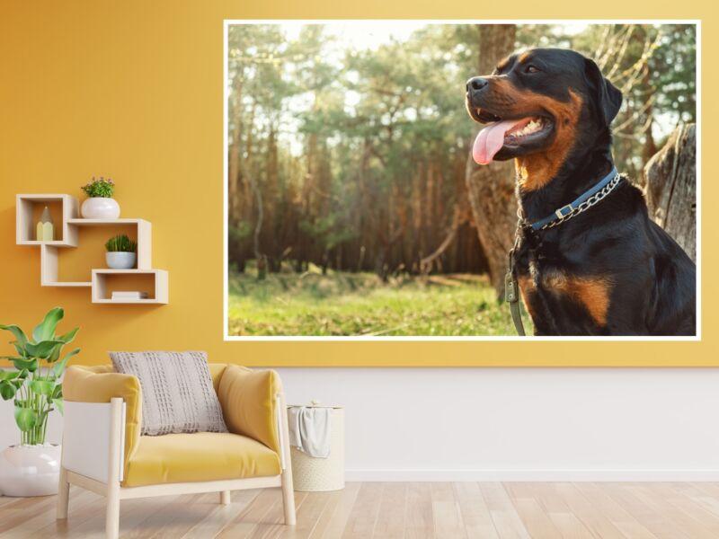 Rottweiler 2 - Öntapadós poszter