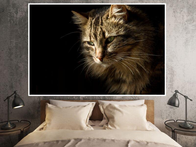 Macskák 1 - Öntapadós poszter