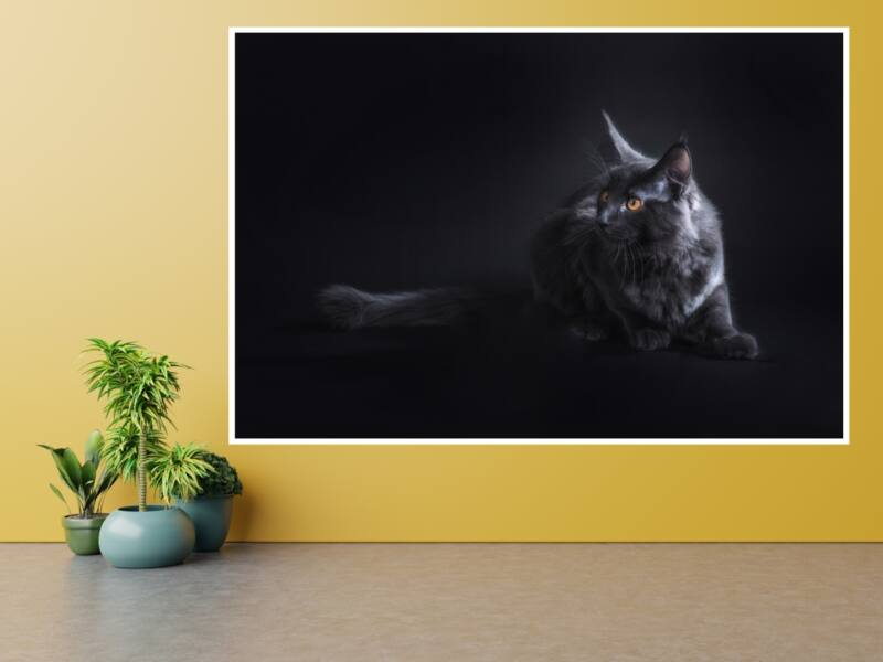 Macskák 11 - Öntapadós poszter