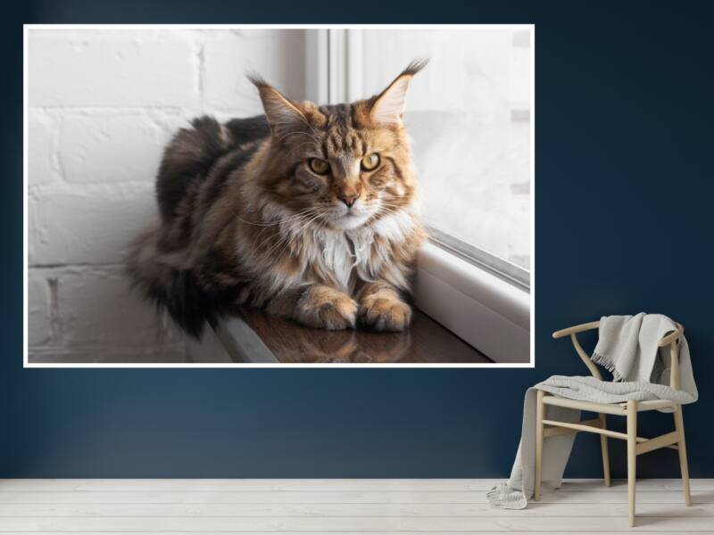 Macskák 12 - Öntapadós poszter