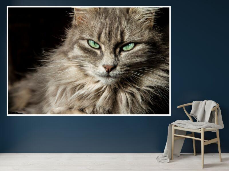 Macskák 13 - Öntapadós poszter