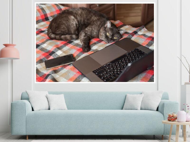 Macskák 15 - Öntapadós poszter