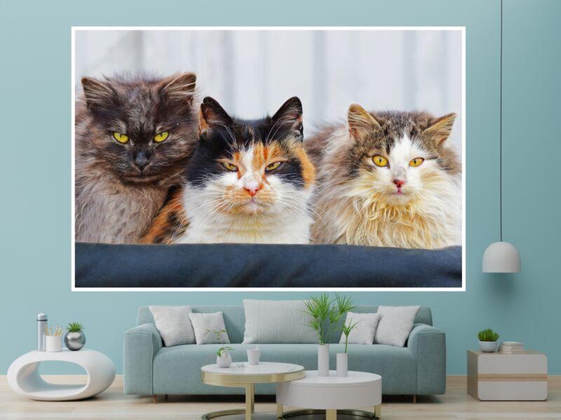 Macskák 17 - Öntapadós poszter