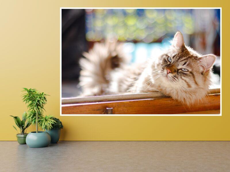 Macskák 19 - Öntapadós poszter