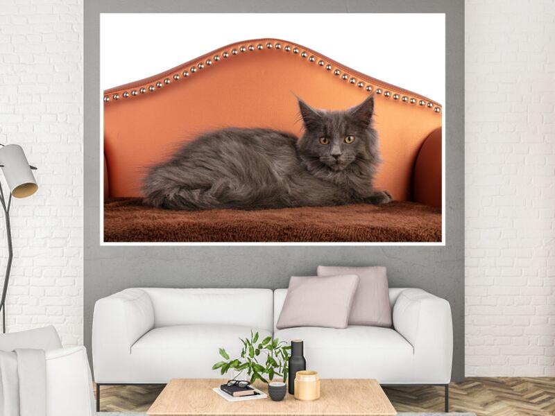 Macskák 20 - Öntapadós poszter