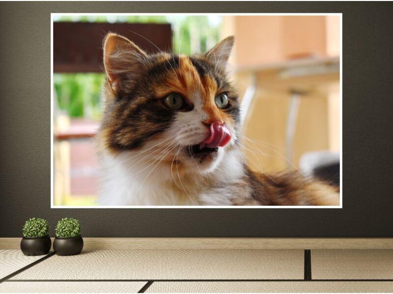 Macskák 3 - Öntapadós poszter