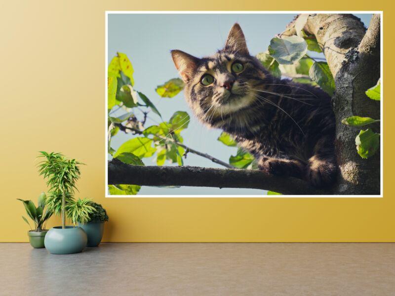 Macskák 9 - Öntapadós poszter