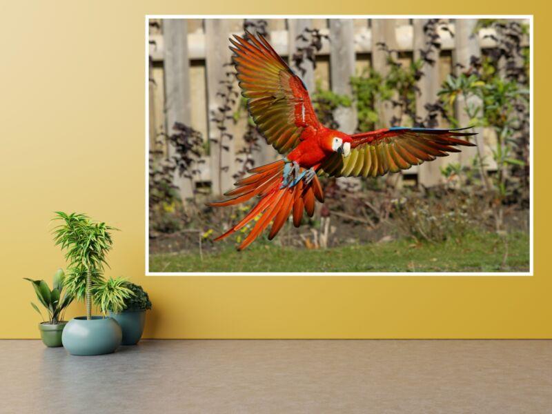 Ara papagáj 1 - Öntapadós poszter