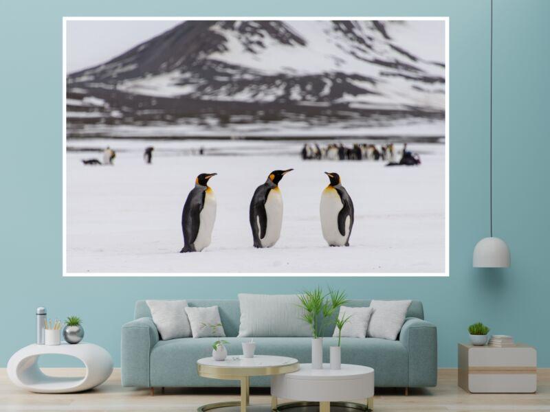 Pingvinek - Öntapadós poszter