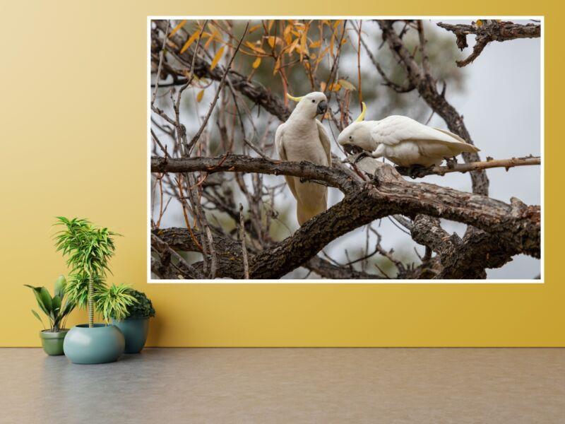 Sárgabóbitás kakadu - Öntapadós poszter