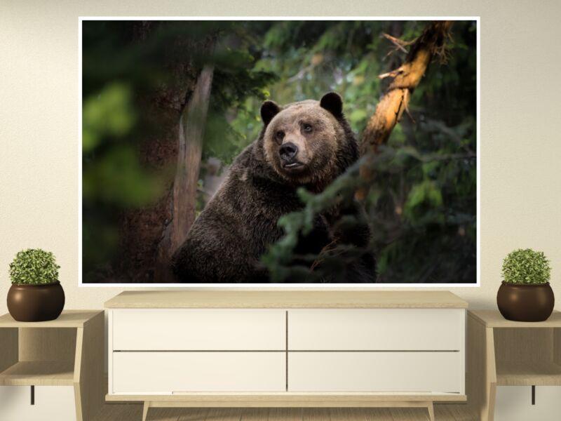 Barna medve 2 - Öntapadós poszter