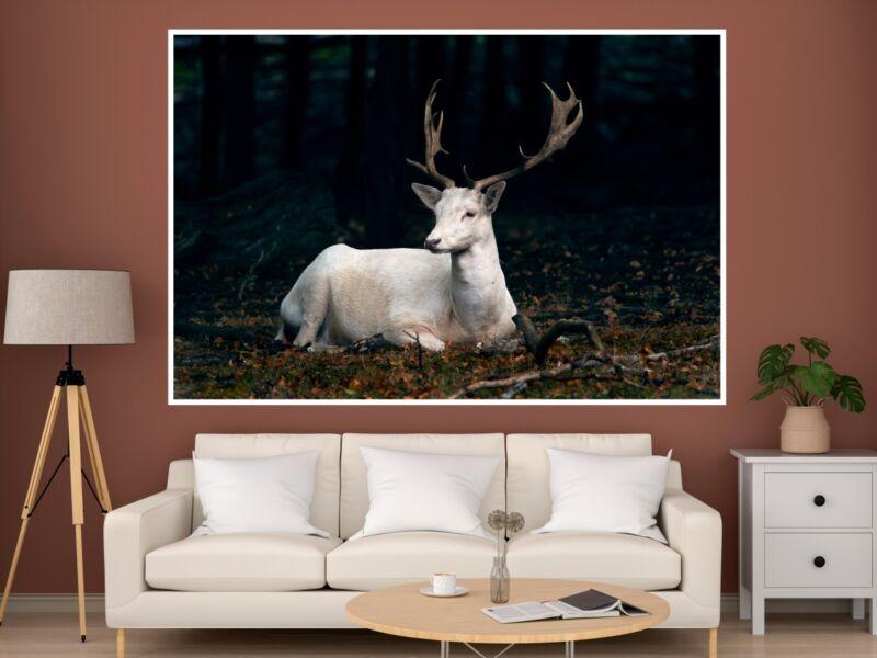 Fehér szarvas - Öntapadós poszter