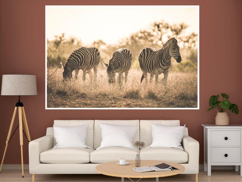 Zebrák - Öntapadós poszter