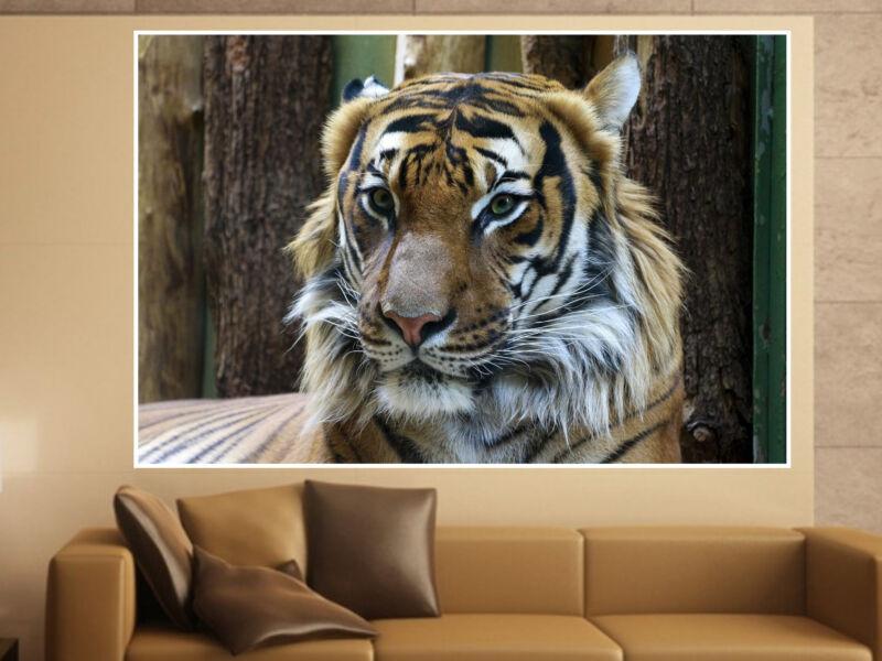 Tigris 01 Öntapadós Poszter