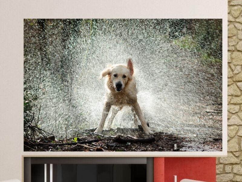 Labrador az esőben Öntapadós Poszter 02