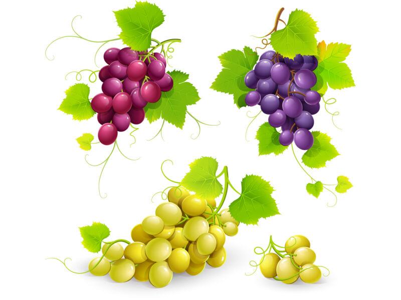 szőlőfürtök színes falmatrica csomag