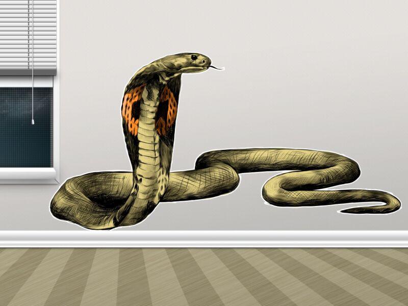 Kobra kígyó - Színes falmatrica