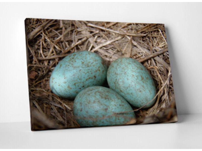 Holló tojások